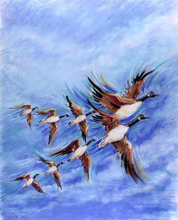 Birds In Formation