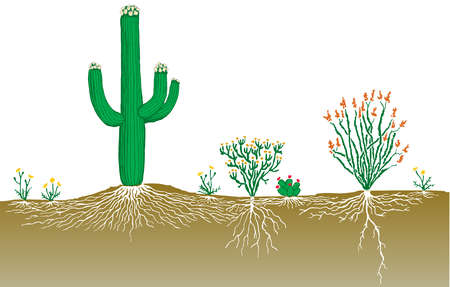 Vegetation profile of a desert.