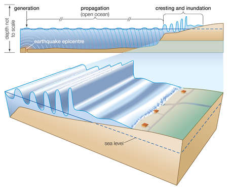 Generated by an undersea earthquake, a tsunami may propagate over open ocean waters before cresting and inundating a coastline.