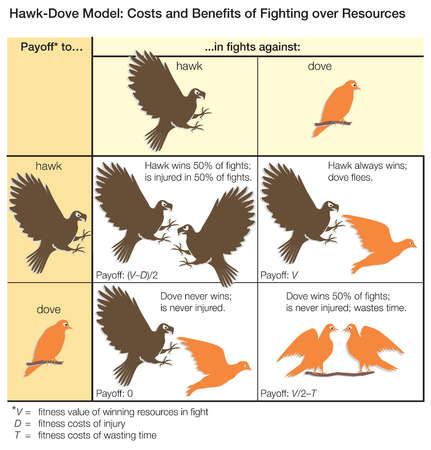 The Hawk-Dove model of game theory, illustrating the costs and benefits of fighting over resources.