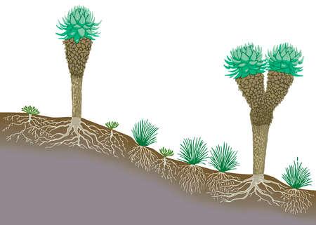 Vegetation profile of tropical mountain lands.