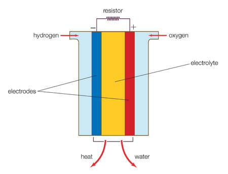 A fuel cell (actually a group of cells) has essentially the same kinds of components as a battery.