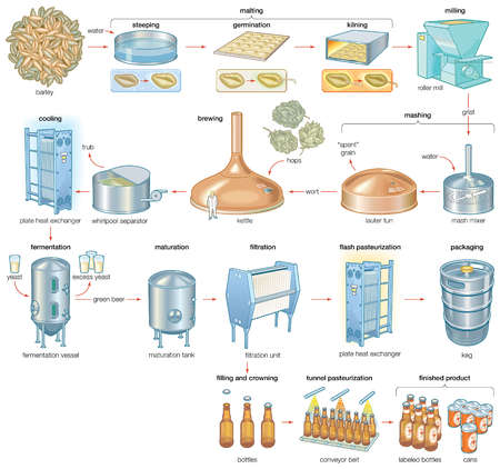 The brewing process, which turns barley and hops into the alcoholic beverage of beer.