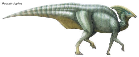 Parasaurolophus, 'beside Saurolophus,' a late Cretaceous herbivore with a hollow crest extending from the back of its skull.
