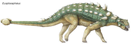 Late Cretaceous dinosaur, Euoplocephalus, meaning 'well-armored head,' also had bony horns, plates, studs and a clubbed tail