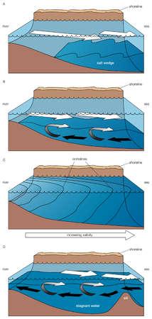 Four main types of estuaries: A) salt wedge estuary, B) partially mixed estuary, C) vertically homogeneous estuary, D) fjord.