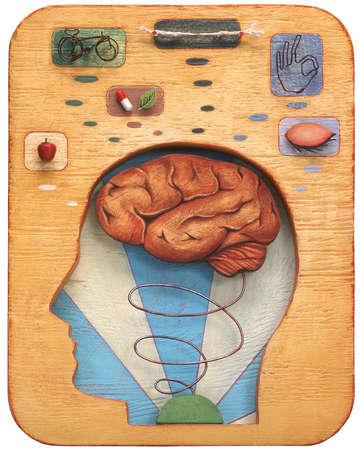 Human brain cut out