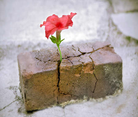 flower growing out of a brick