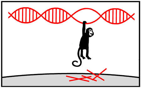 Monkey hanging from dna strand