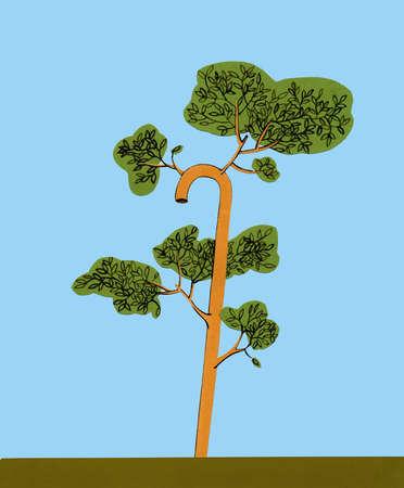 Walking cane tree