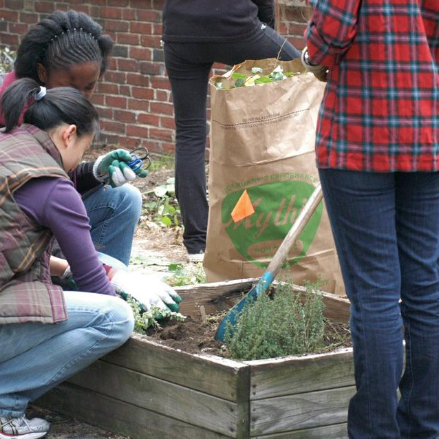Harvard's Food Literacy Project collaborates with local non-profit City Sprouts to garden at the Graham and Park School Sunday afternoon.