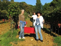 Vendemmia at Villa I Tatti