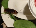 Cockroach in Adams Dish Return