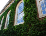 Around the Ivies
