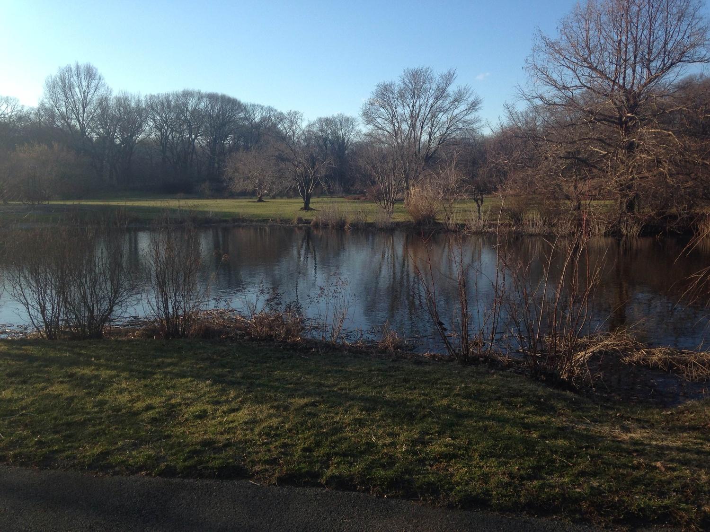 Arnold Arboretum 2