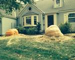 Lieber pumpkins