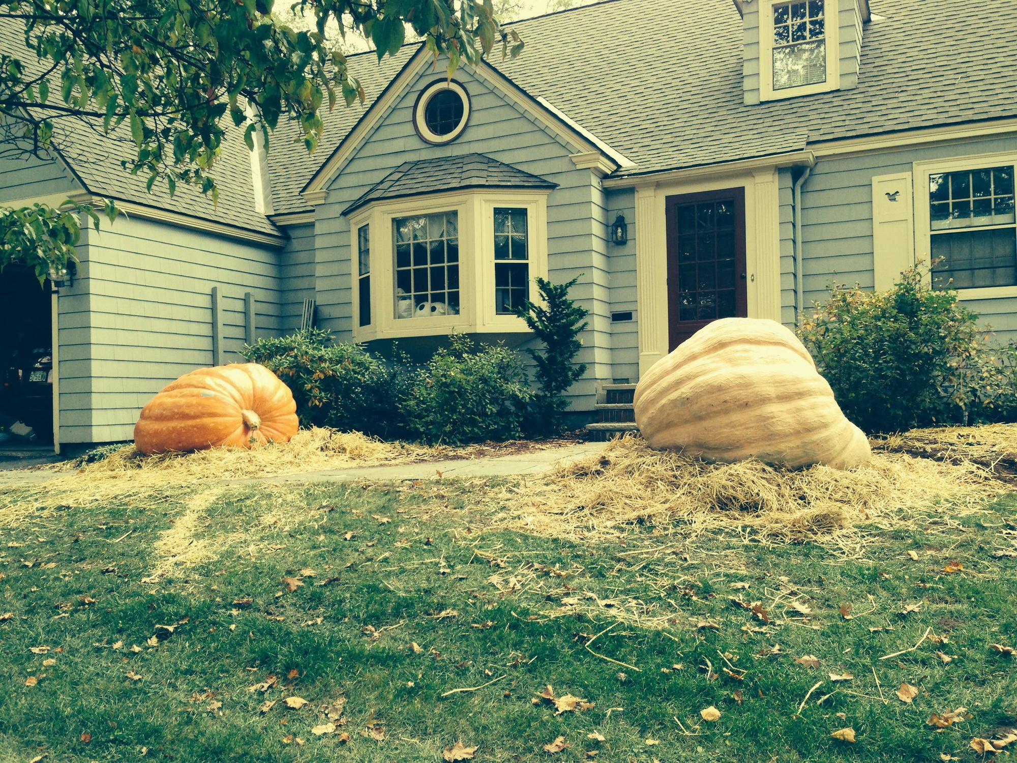 Pumpkins outside the Lieber residence