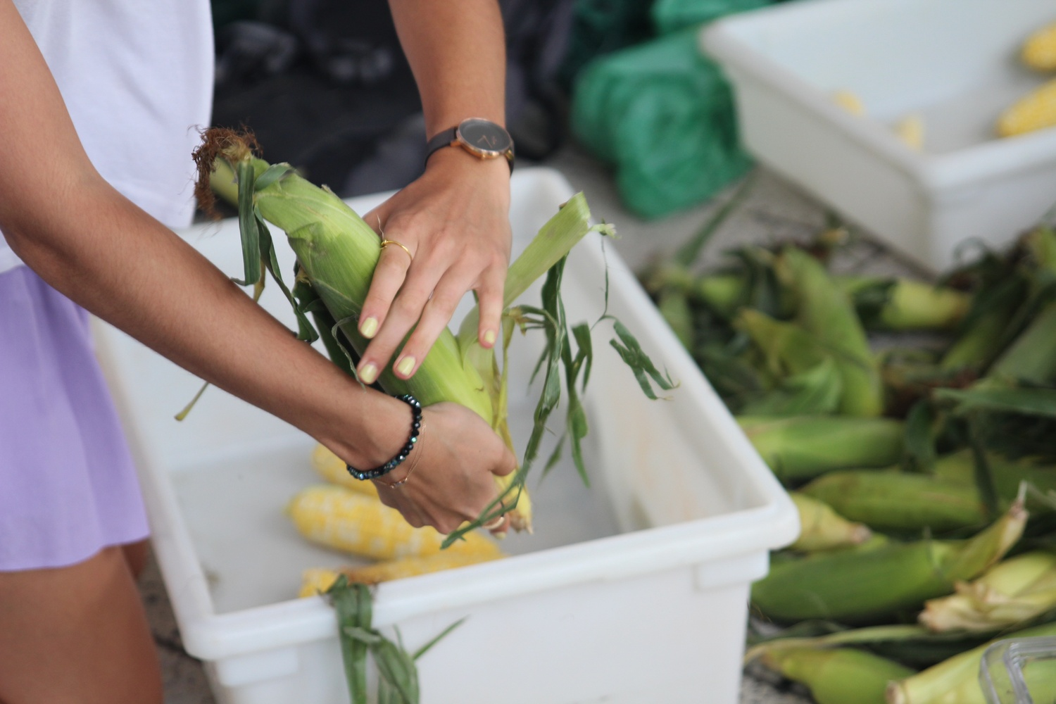 Students compete in the Harvard 'Shuck Off' at the Farmers' Market in the Science Center Plaza on Tuesday afternoon. The winners of the competition won fresh corn for their dining halls.