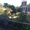 Lowell House Community Garden