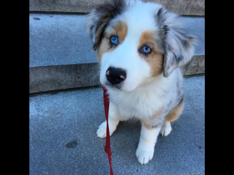 Rosie the Puppy