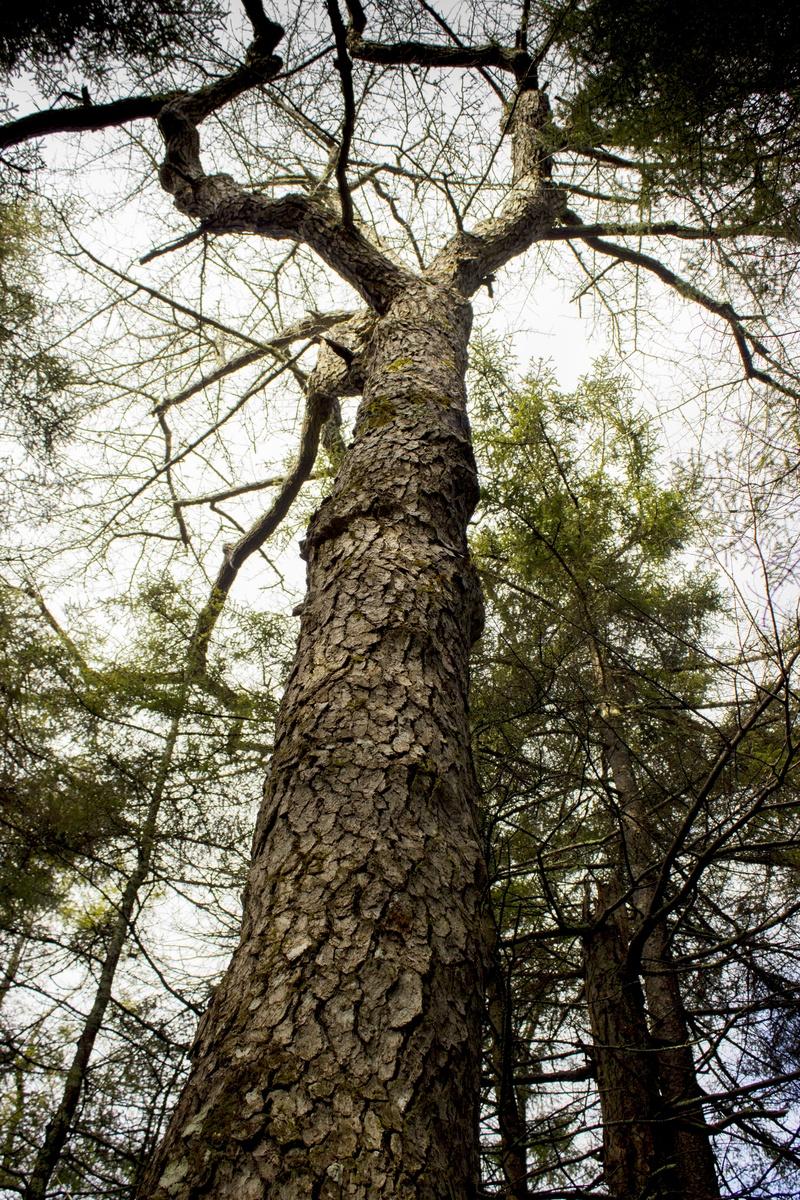 Timeworn Trees