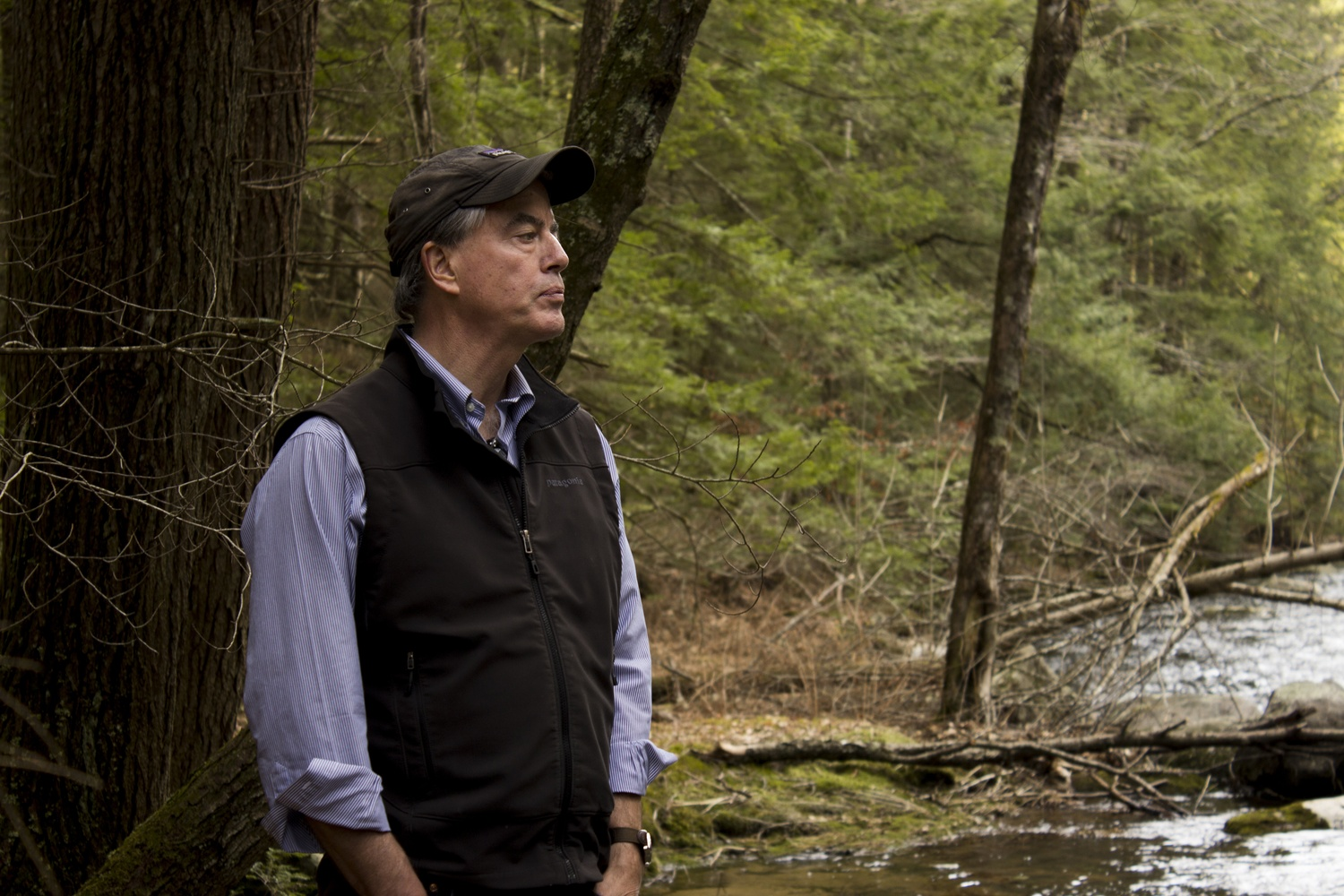 Director of the Harvard Forest David R. Foster surveys neighboring hemlock trees in one of the only areas of the forest which exists purely for observational purposes.