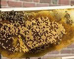 Rebollo's Bees