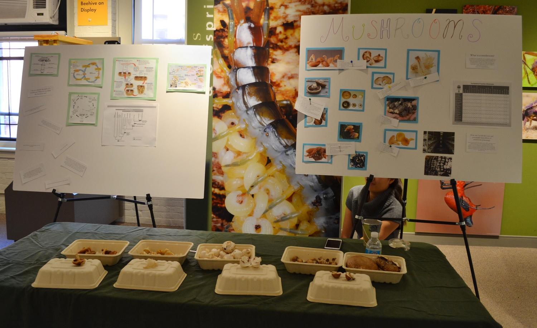 Third Annual Fungus Fair