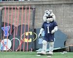 Yale Bulldog