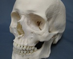 A skull. Human, in origin.