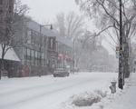 Bitter Blizzard
