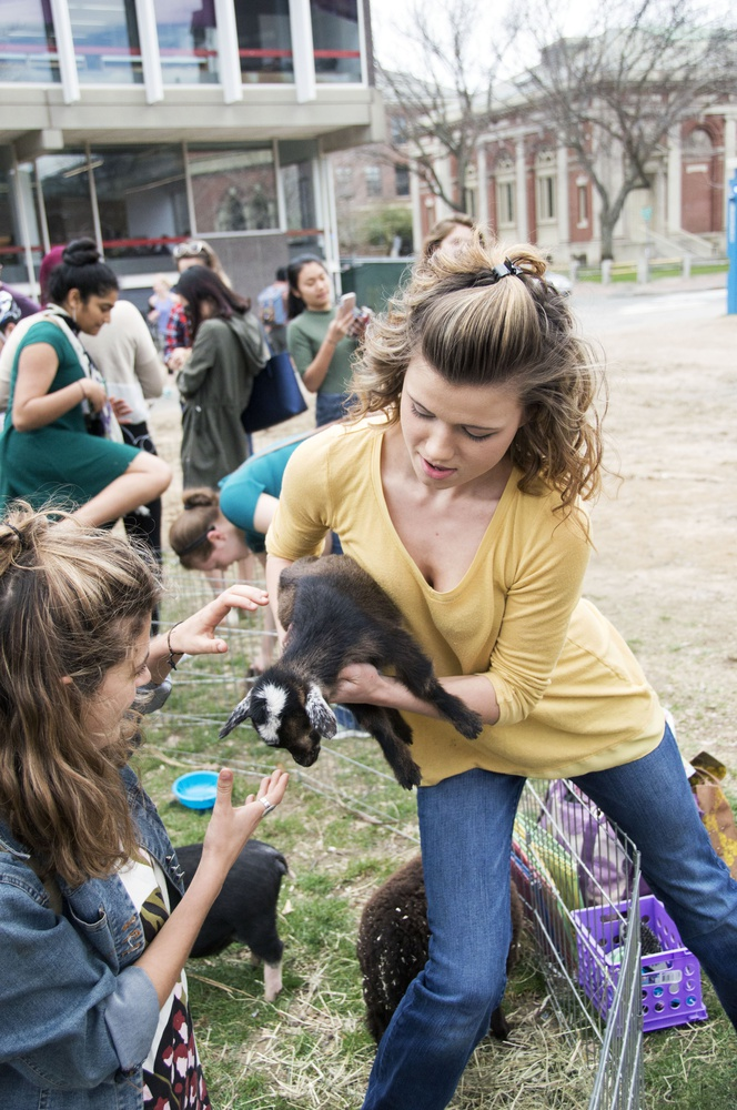 A petting zoo facilitator shows a Harvard student how to hold a kid named Blizzard, Monday afternoon. The petting zoo, held on the Science Center Plaza, featured goats, ducks, chicks and rabbits for visitors to hold.