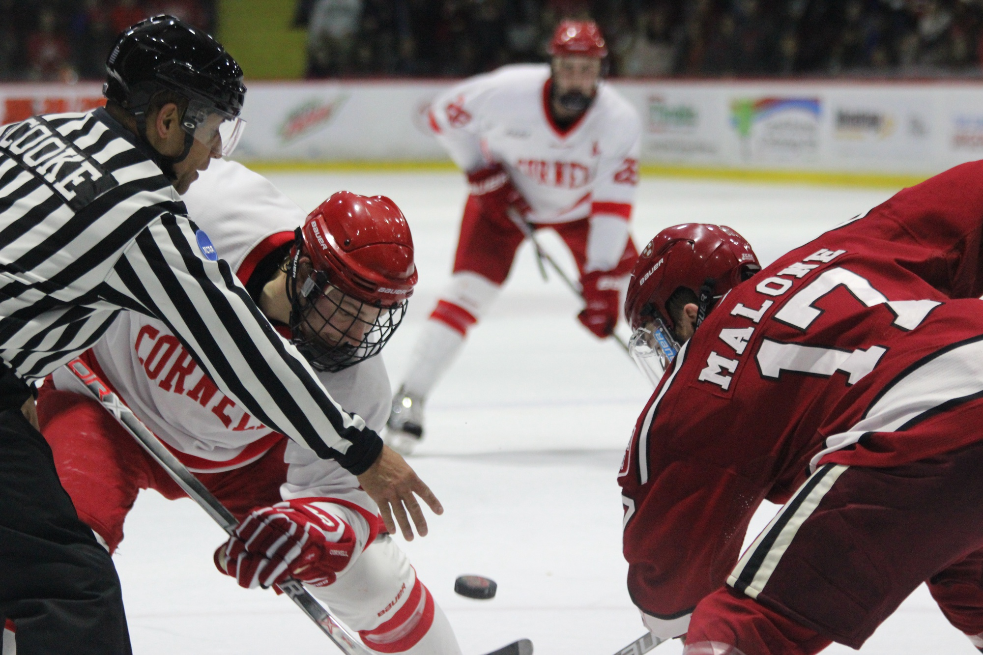 Senior forward Sean Malone readies himself for a face-off during the men's hockey team's 4-1 win over Cornell in January.