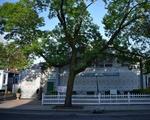 Islamic Society of Boston