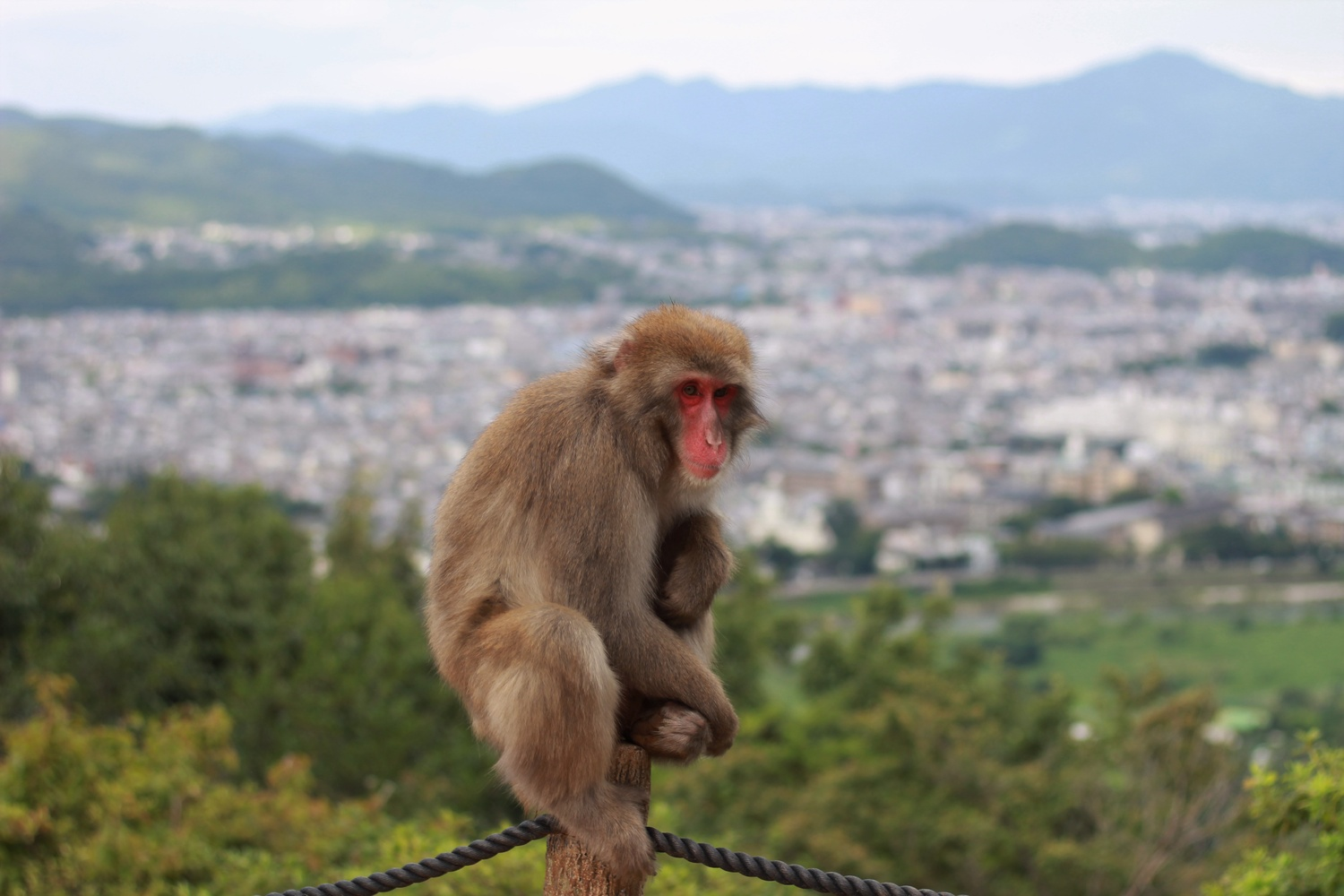 Monkey at Iwatayama
