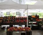 Farmer's Market pt. 2