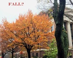 Fall, the Playlist