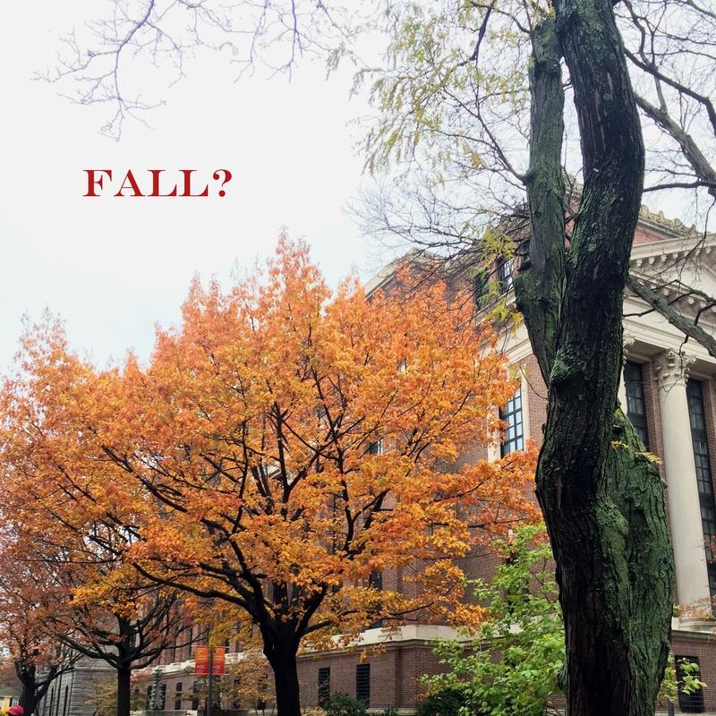 Fall, the Playlist