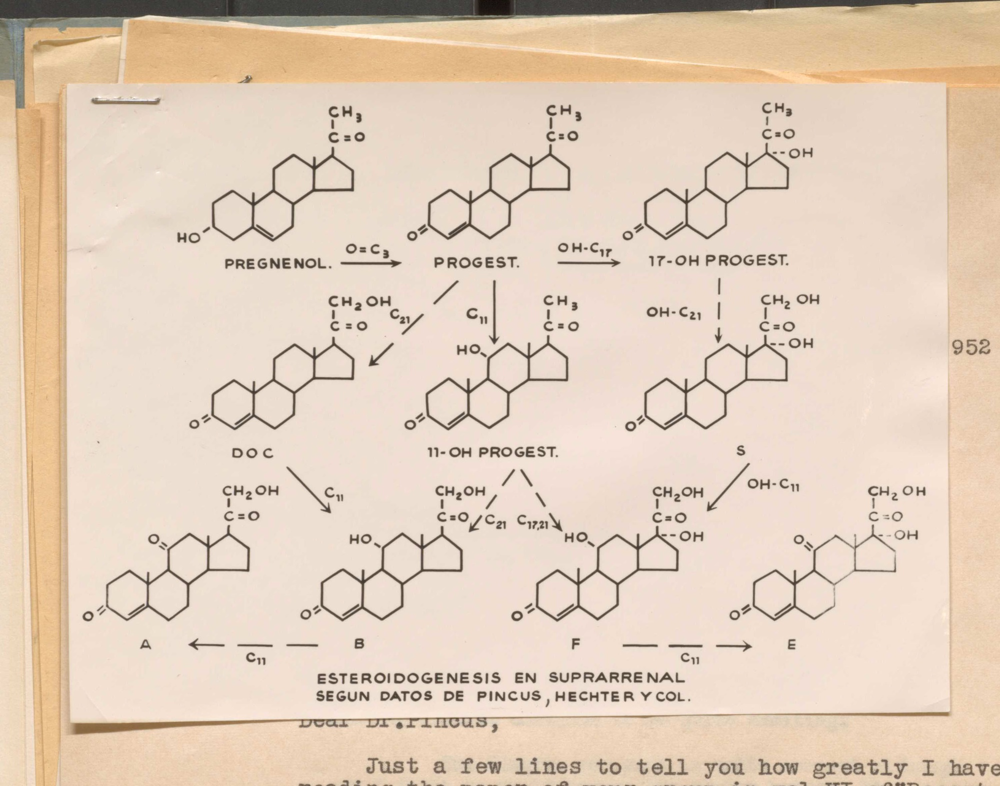 George C. Pincus and Min-Cheuh Chang tested a variety of these compounds, before settling on norethynodrel.