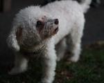 Doggo at Leverett
