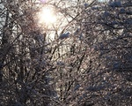 Branches of Ice