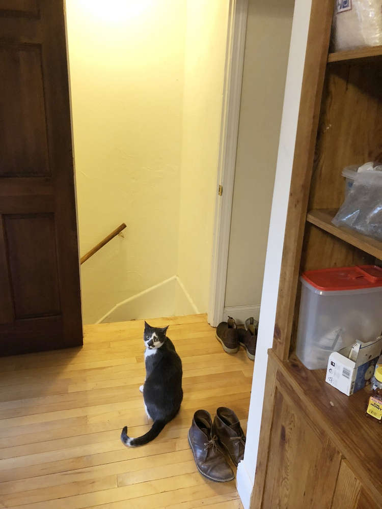 A cat named Chicken greets visitors in the entrance to graduate student Jack M. Nicoludis's home.