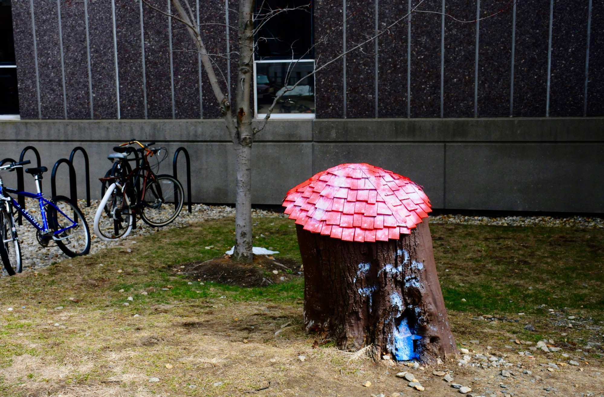 A small stump with a red shingle roof and battered blue door next to the Science Center are all that remain of Winnie the Pooh's homes in Cambridge.