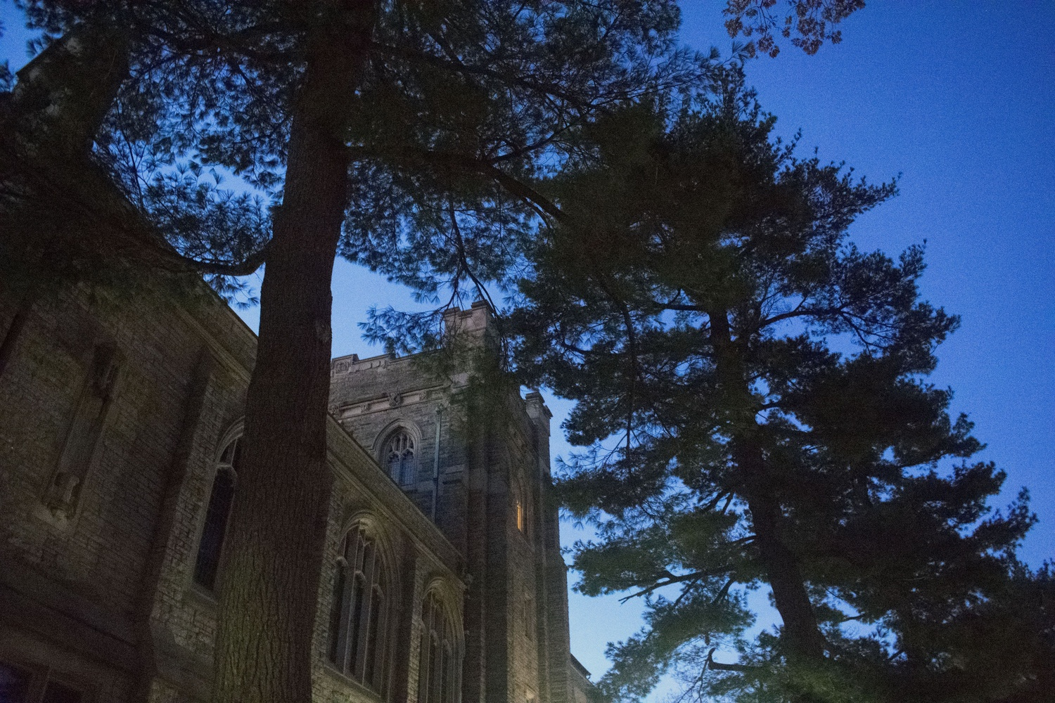 Administrators plan to fell a century-old red oak tree on the Divinity School's campus as part of planned renovations to Andover Hall. Some students are outraged.