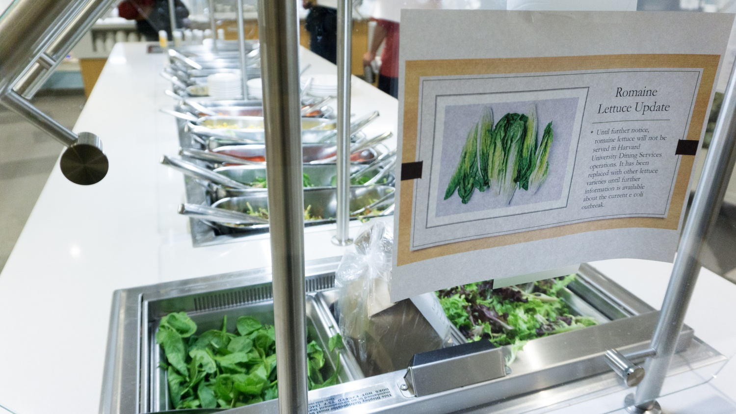 Harvard Removes Romaine Lettuce From Dining Halls Following E Coli