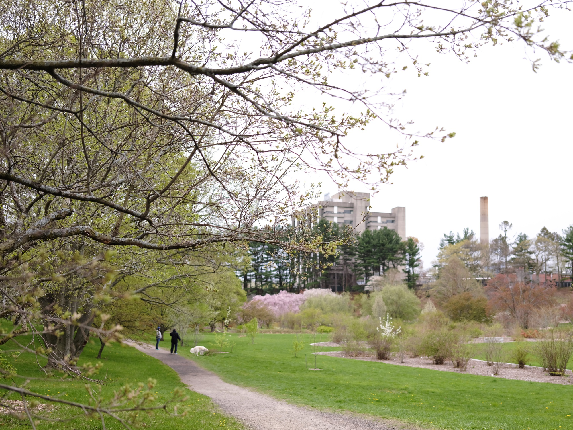 Harvard University's Arnold Arboretum is located in the Jamaica Plain and Roslindale sections of Boston.