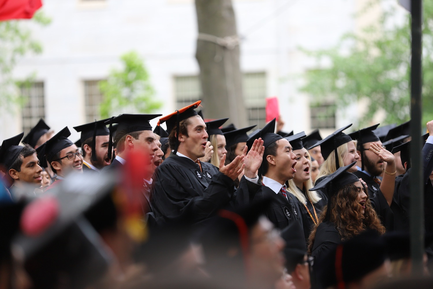 Members of the Harvard College Class of 2019 stand and cheer as their degrees are conferred during Morning Exercises.