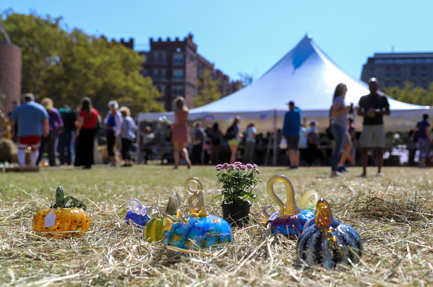 Every September since 2001, the MIT Glass Lab has hosted a sale of over 2,000 hand-blown glass pumpkins.
