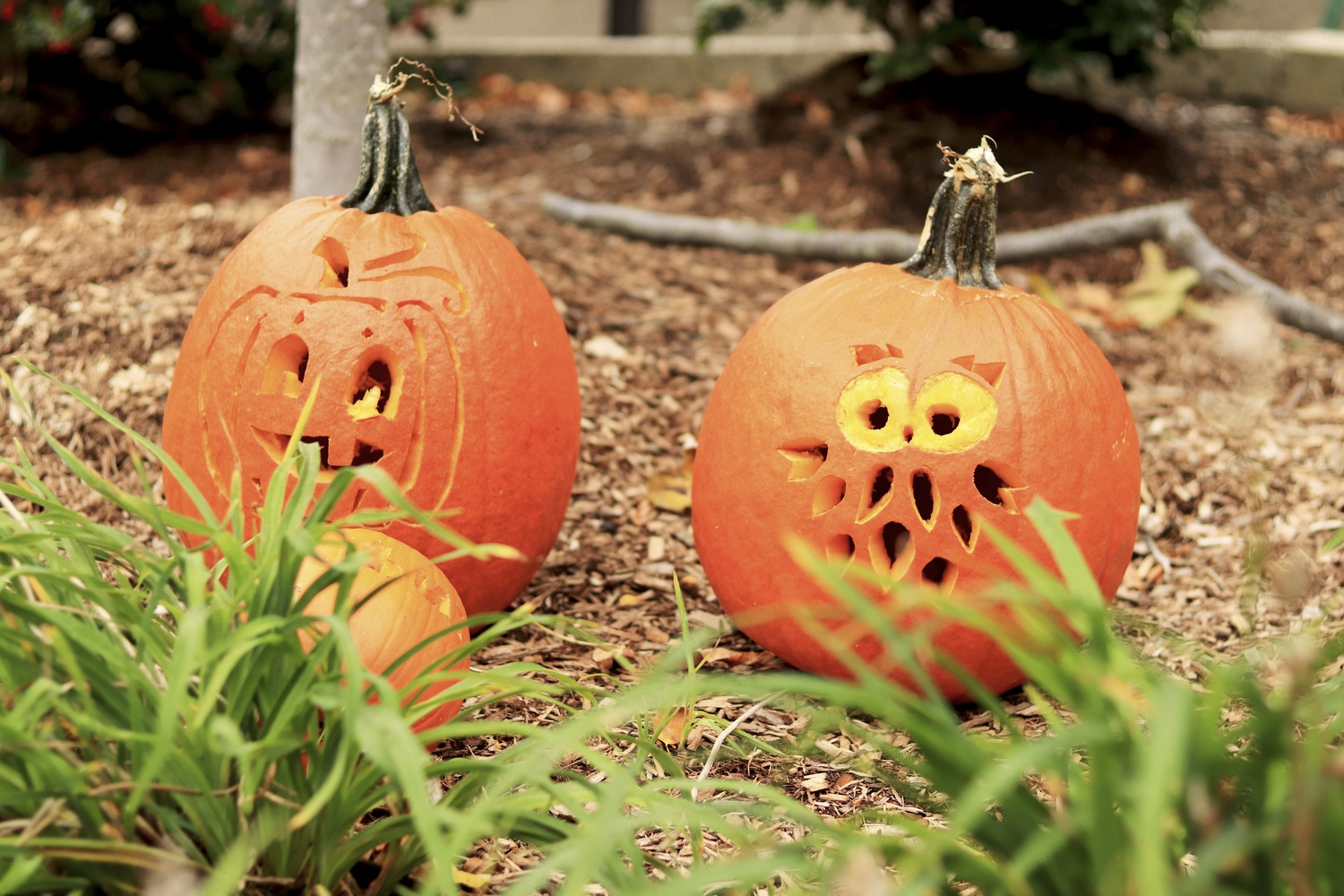 With Halloween around the corner, Harvard students decorate the Quad with carved pumpkins.