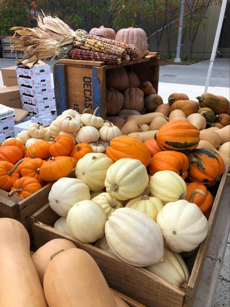 Pumpkins at the Harvard Farmer's Market